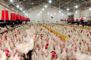 Instalaciones avícolas