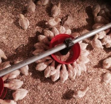comedores para aves instalados por Calfri
